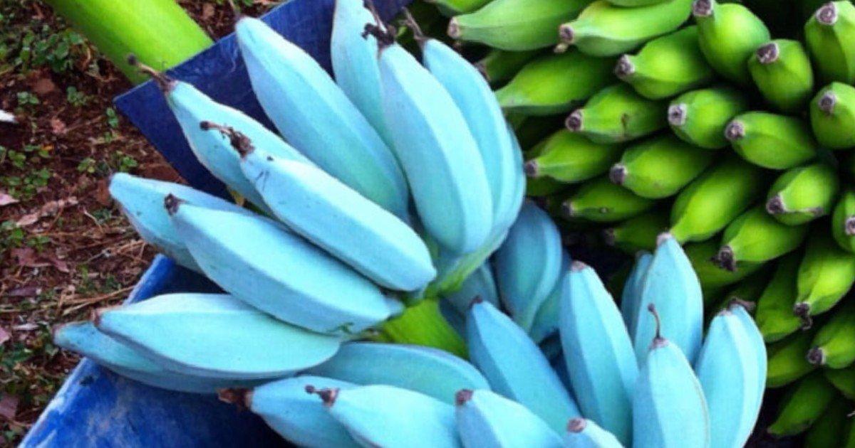 e18486e185aee1848ce185a6 57.jpg?resize=412,232 - People Who Tried Blue Java Banana Share Its Taste