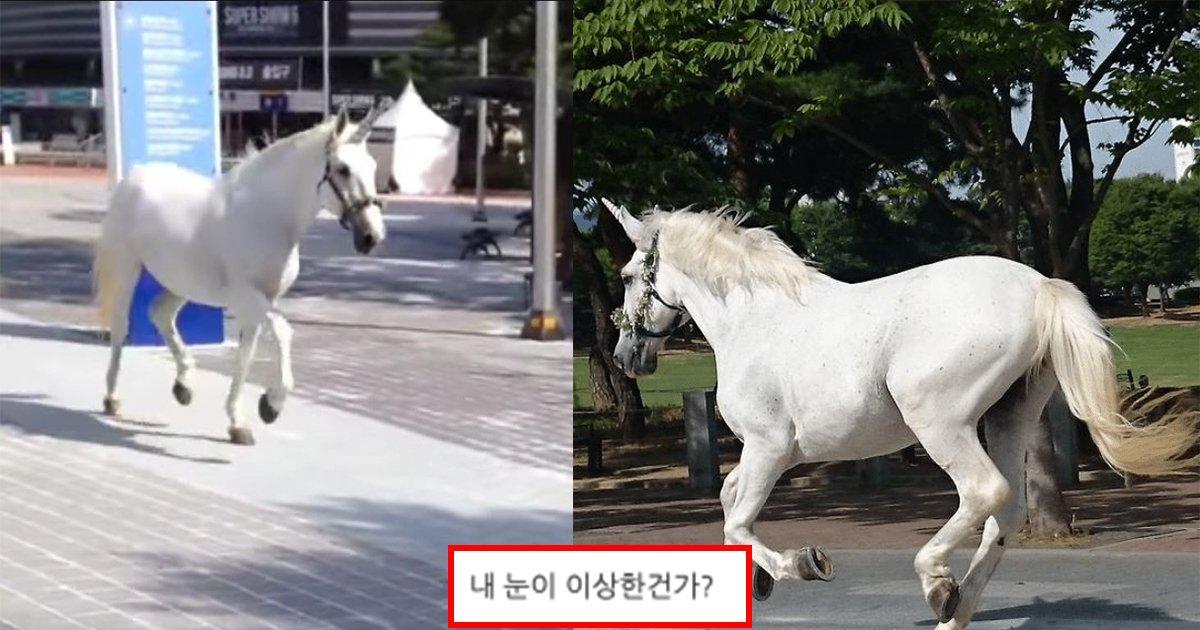 ec9ca0eb8b88ecbd98.jpg?resize=412,232 - ' 내 눈이 이상한가..?' ... 서울 한복판 올림픽 공원에 신화에서만 등장하던 '유니콘'이 실제로 나타났다