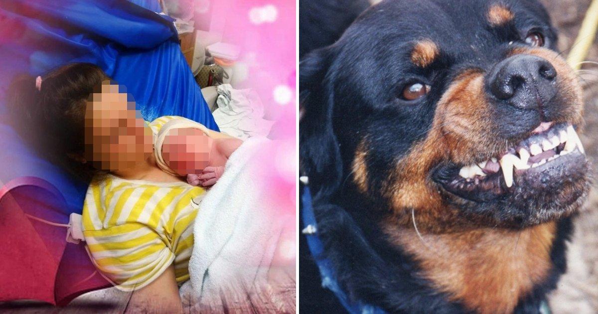 ffffffffffffff.jpg?resize=1200,630 - New Born Baby Died After Brutally Mauled By The Family Dog