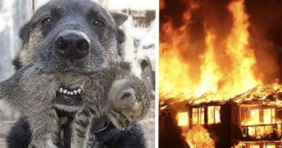 fres.jpg?resize=412,232 - Un chien sauve son meilleur ami des flammes