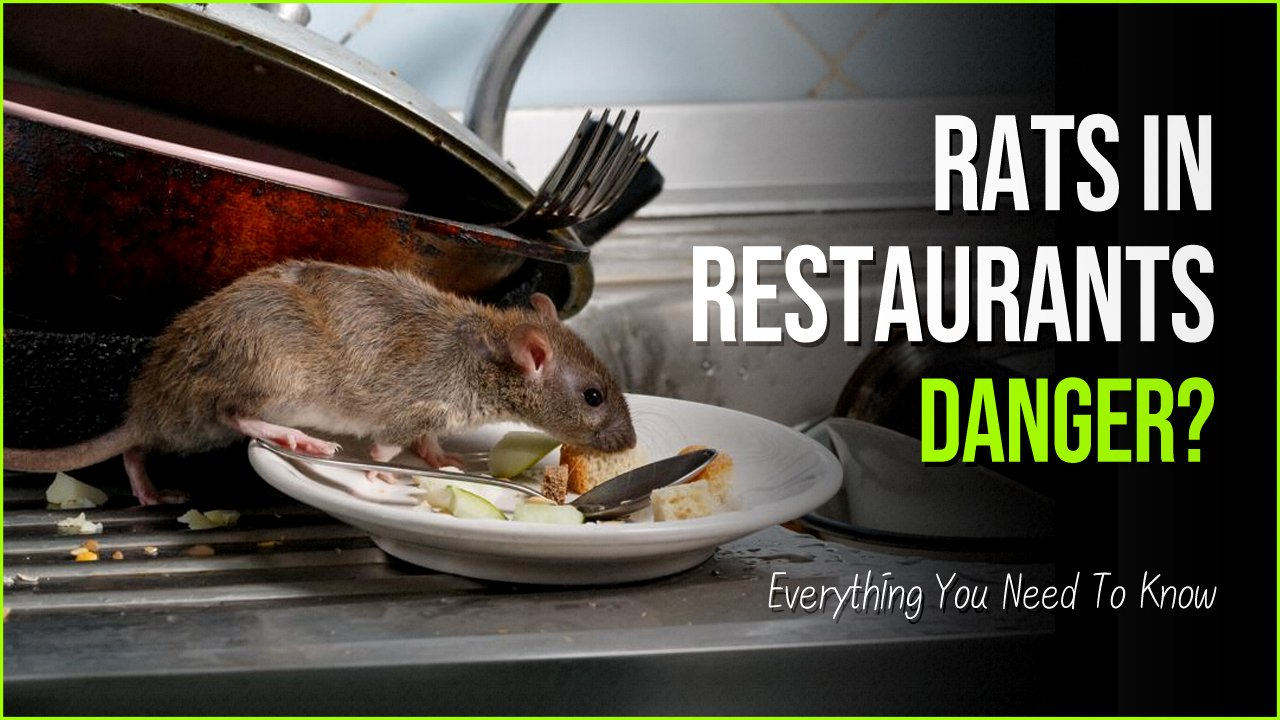 gafdaadsf.jpg?resize=412,232 - Rats In Restaurants Exist But It's Not As Bad As You Might Think
