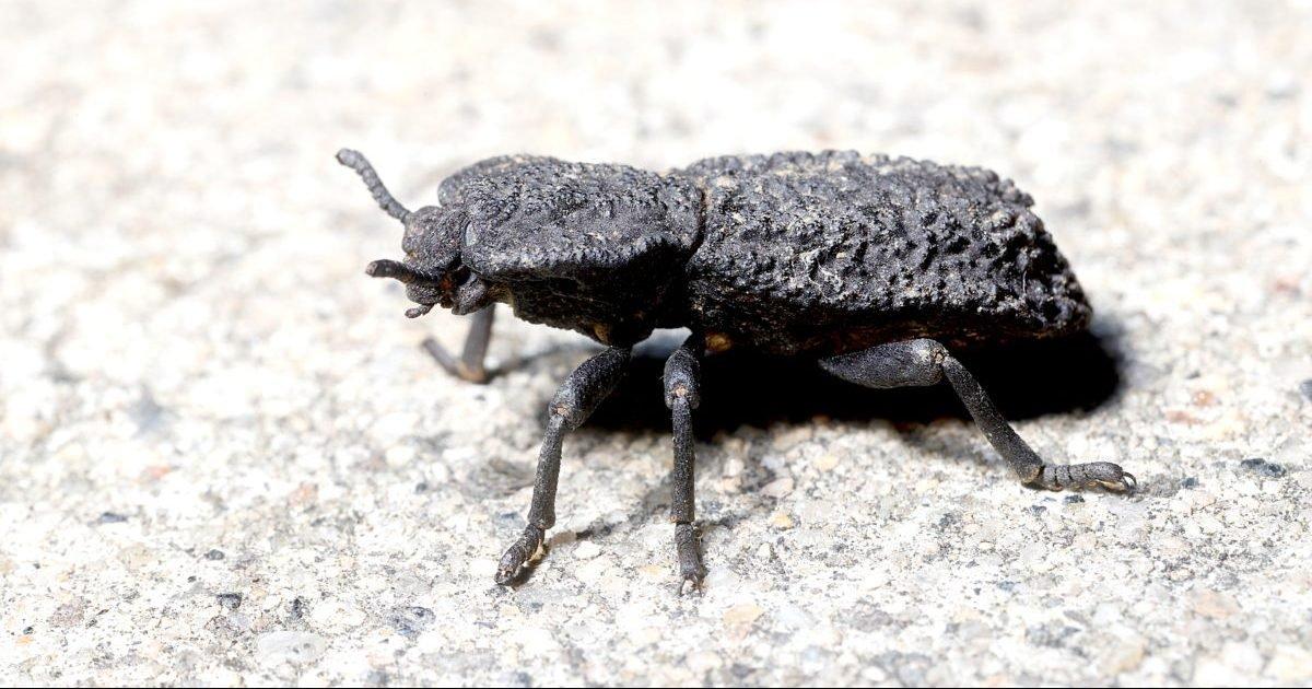 gettyimages 1219264703 1200x800 e1603498218220.jpg?resize=1200,630 - Ce scarabée pourrait être la solution pour des véhicules plus résistants