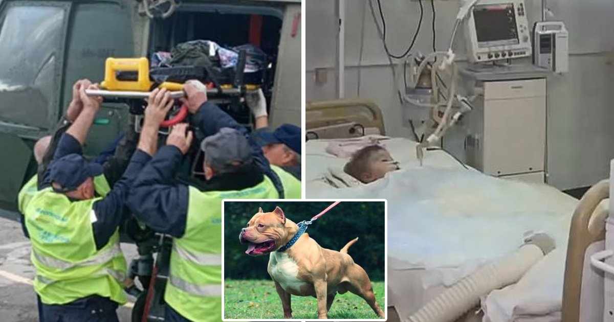 hsdfsfd.jpg?resize=412,232 - 2-Year Old Boy Dies After Dog Ripped Off His Genitals On His Birthday
