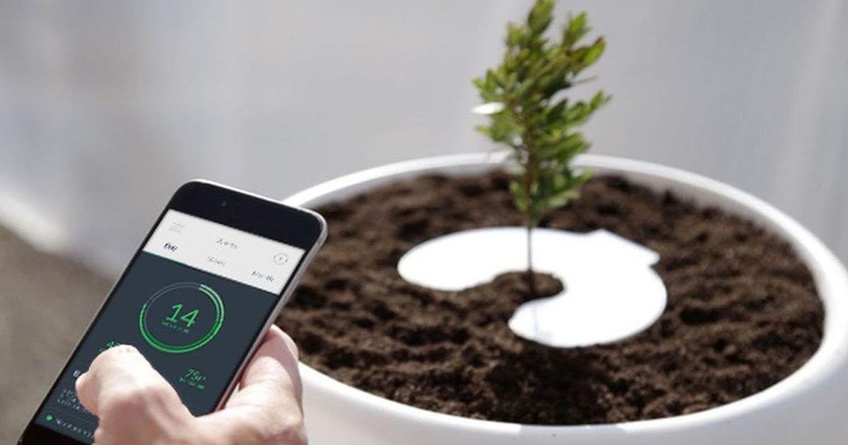 maxresdefault 1 4 e1603899676833.jpg?resize=412,232 - Savez-vous que vous pourriez devenir un arbre après la mort ?
