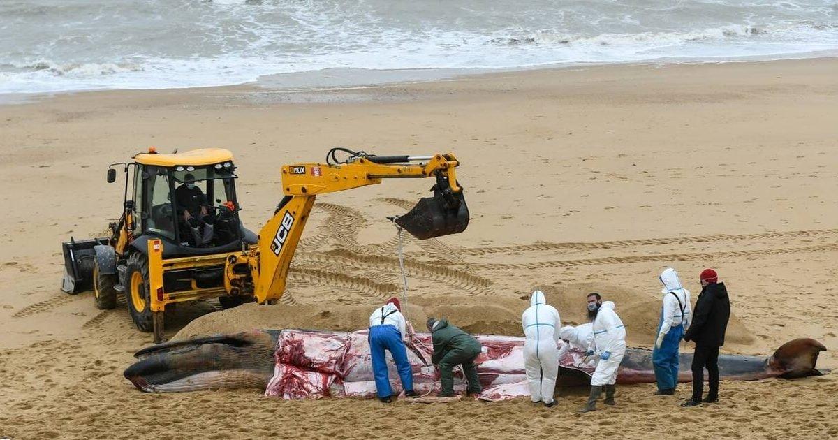 ouest france 1 e1601913343510.jpg?resize=412,232 - Vendée : Un cétacé de 10 mètres retrouvé échoué sur la plage