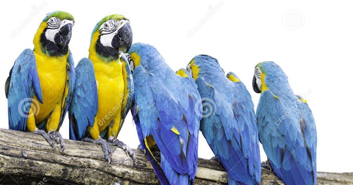 perroquet 43230609 e1601485853322.jpg?resize=412,232 - Des perroquets qui insultaient les visiteurs d'un zoo ont été placés en isolement