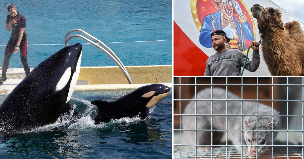 rk6yo.jpg?resize=1200,630 - France To Ban Use Of Wild Animals In Circuses, Marine Parks, And Fur Farms