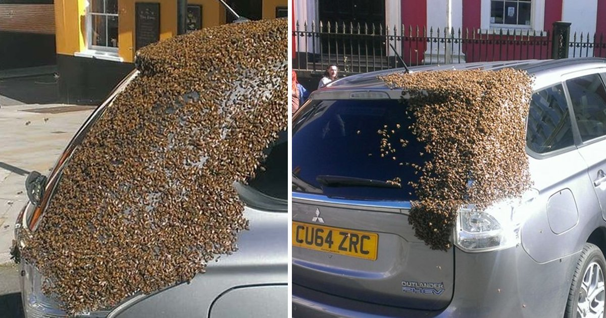 sdfsd.jpg?resize=1200,630 - Swarm Of 20,000 Bees Chase Car For 2 Days After Queen Bee Gets Trapped Inside