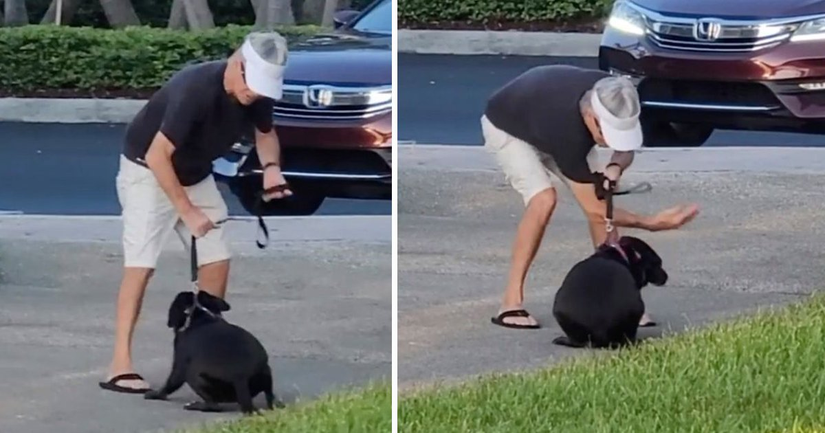 sdsfsdfs.jpg?resize=1200,630 - Florida Pet Owner Caught On Camera Brutally Slapping And Punching Dog