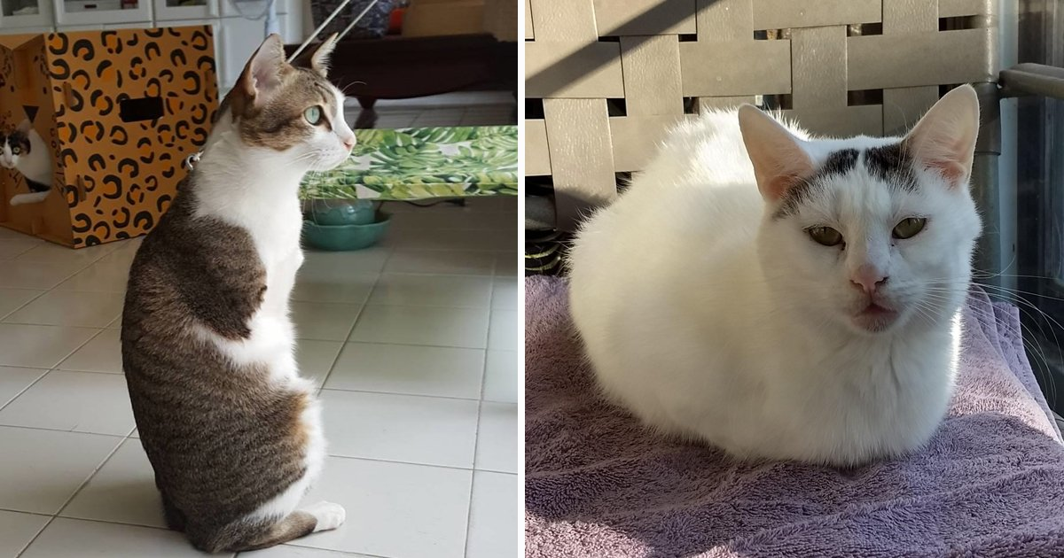 ssdfs.jpg?resize=412,232 - Inspiring Journey Of A Cat With No Legs And Her Quest For a New Home