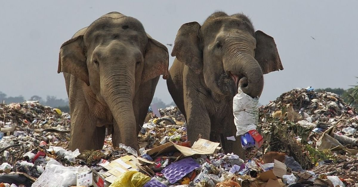 untitled design 10.jpg?resize=1200,630 - Elephants Seen Scavenging Through Trash At Landfill Near Their Natural Habitat