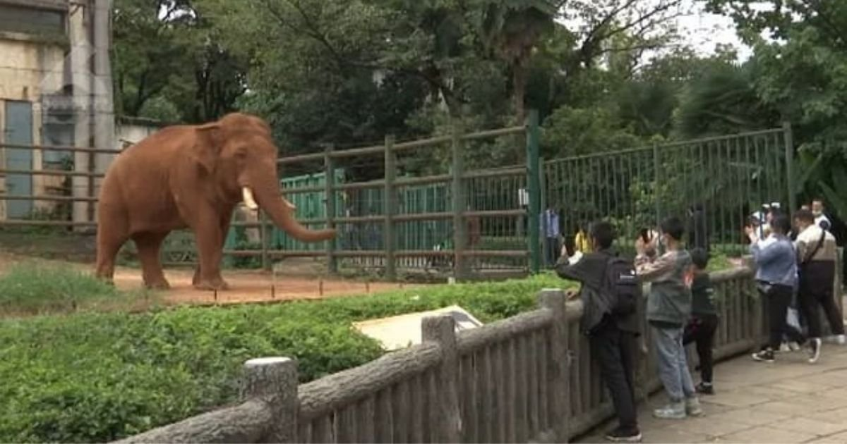 untitled design 6 3.jpg?resize=1200,630 - Elephant Eats Plastic Bag After Zoo Visitor Throws It Into Its Enclosure