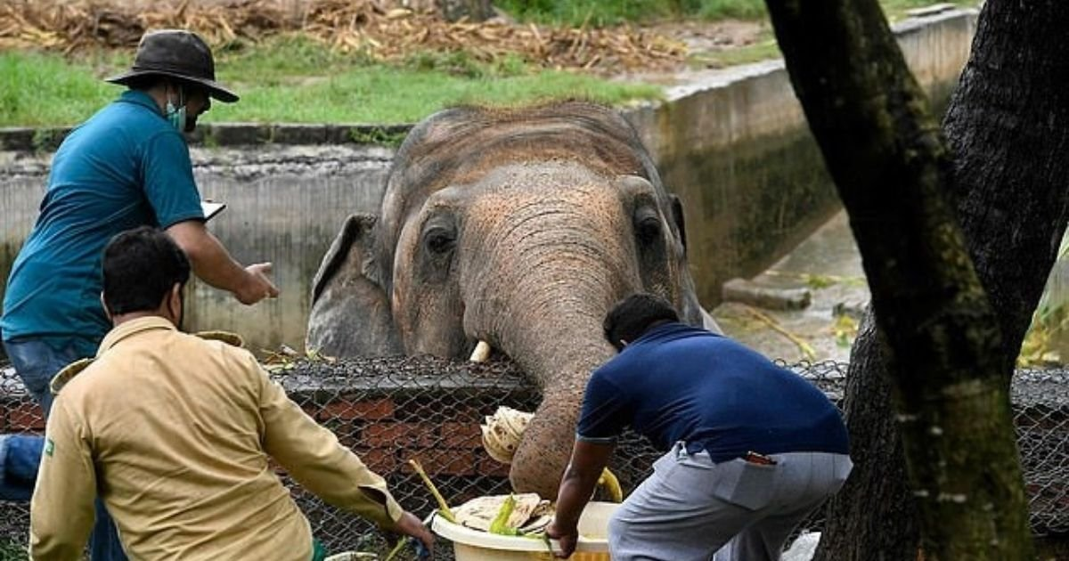 untitled design 9 1.jpg?resize=1200,630 - World's Loneliest Elephant Has Been Living In Terrible Conditions For 35 Years
