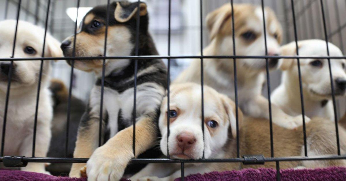 vonjour1 2.png?resize=1200,630 - La SPA lance une pétition pour interdire la vente d'animaux en animalerie