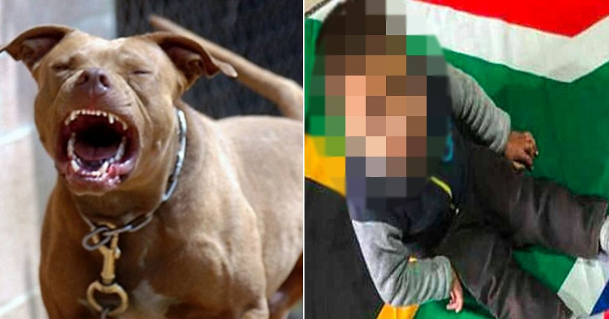 x.jpg?resize=412,232 - 3-Year-Old Mute And Deaf Kid Died After Brutally Mauled By Neighbour's Pitbull