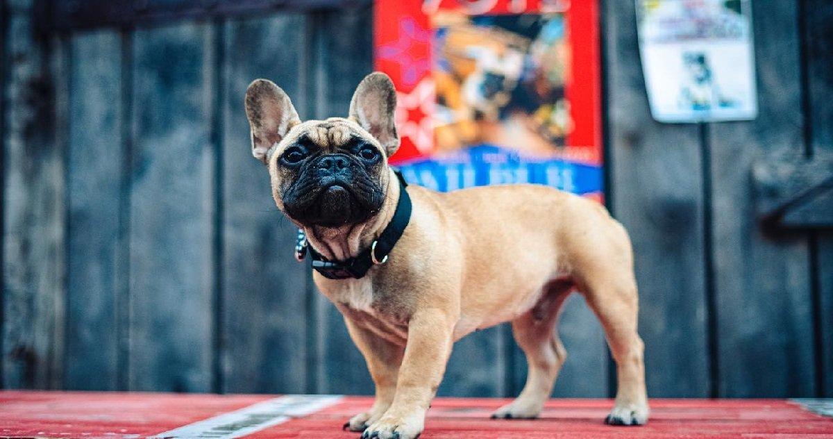 14 maire.jpg?resize=1200,630 - USA: voici Wilbur Beast, ce chien élu maire de la ville de Rabbit Hash
