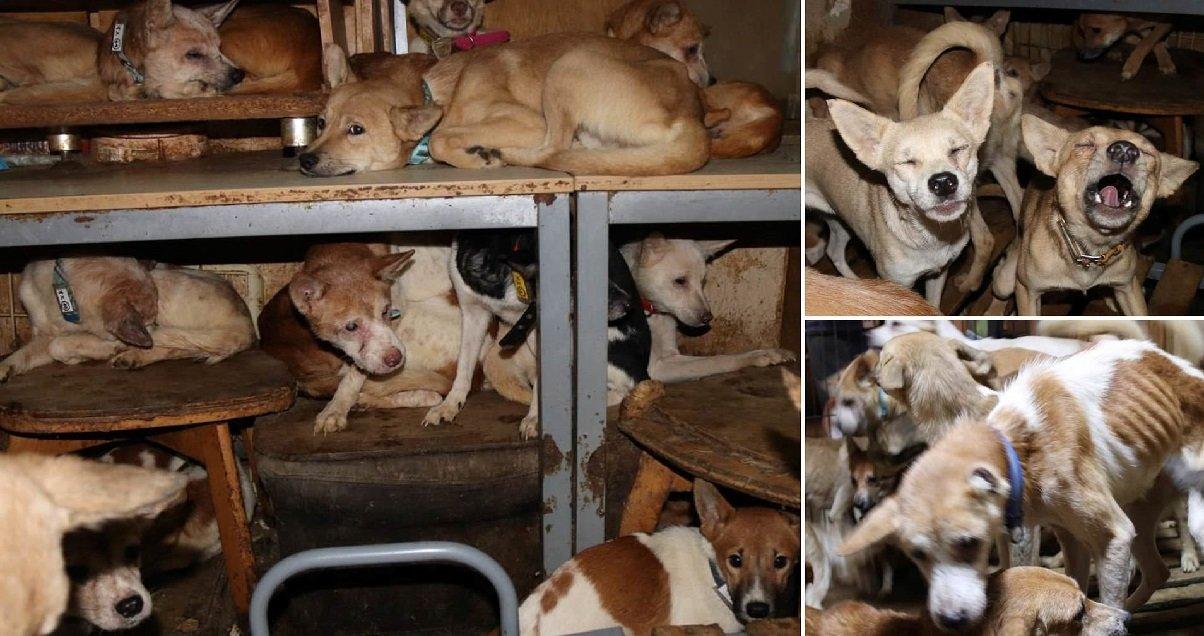2 16.jpg?resize=1200,630 - 164 chiens, entassés, affamés et malades ont été retrouvés dans une maison de 30m2