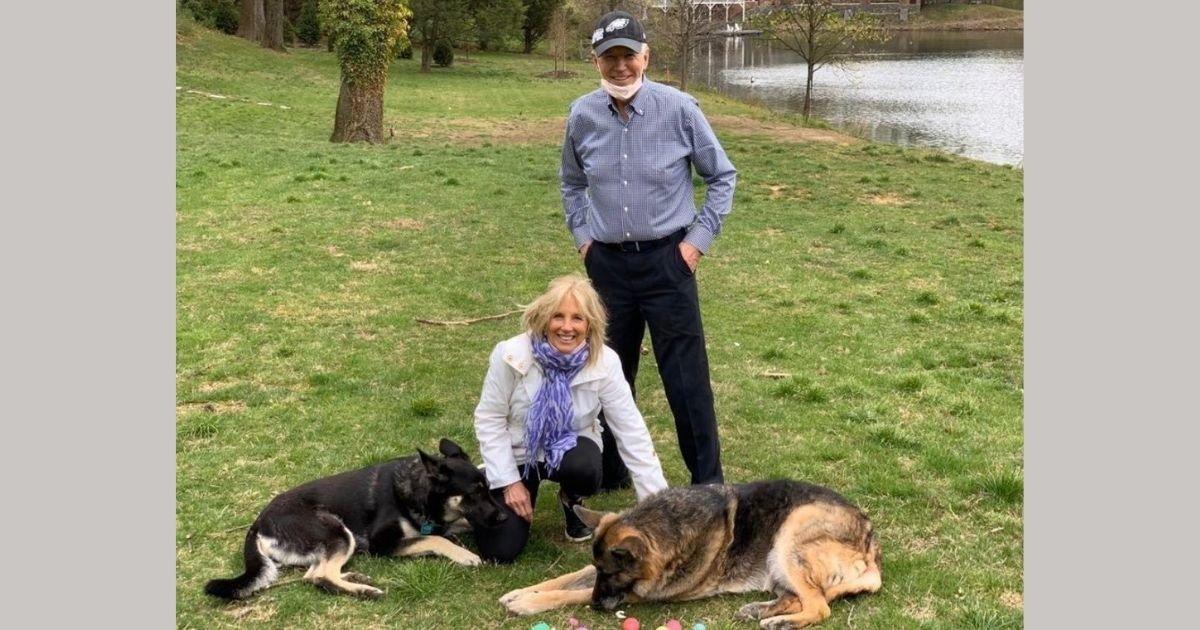2 30.jpg?resize=412,232 - Joe Biden's Dogs Have Now Got Their Own Official TwitterAccount