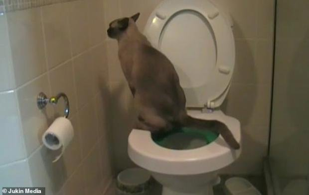 변기에서 볼일 보고 휴지까지?..집사 화장실 사용법 재현하는 고양이