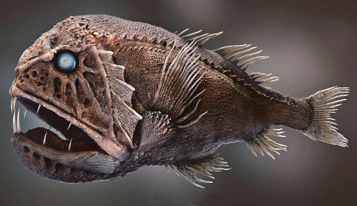 deepest ocean species