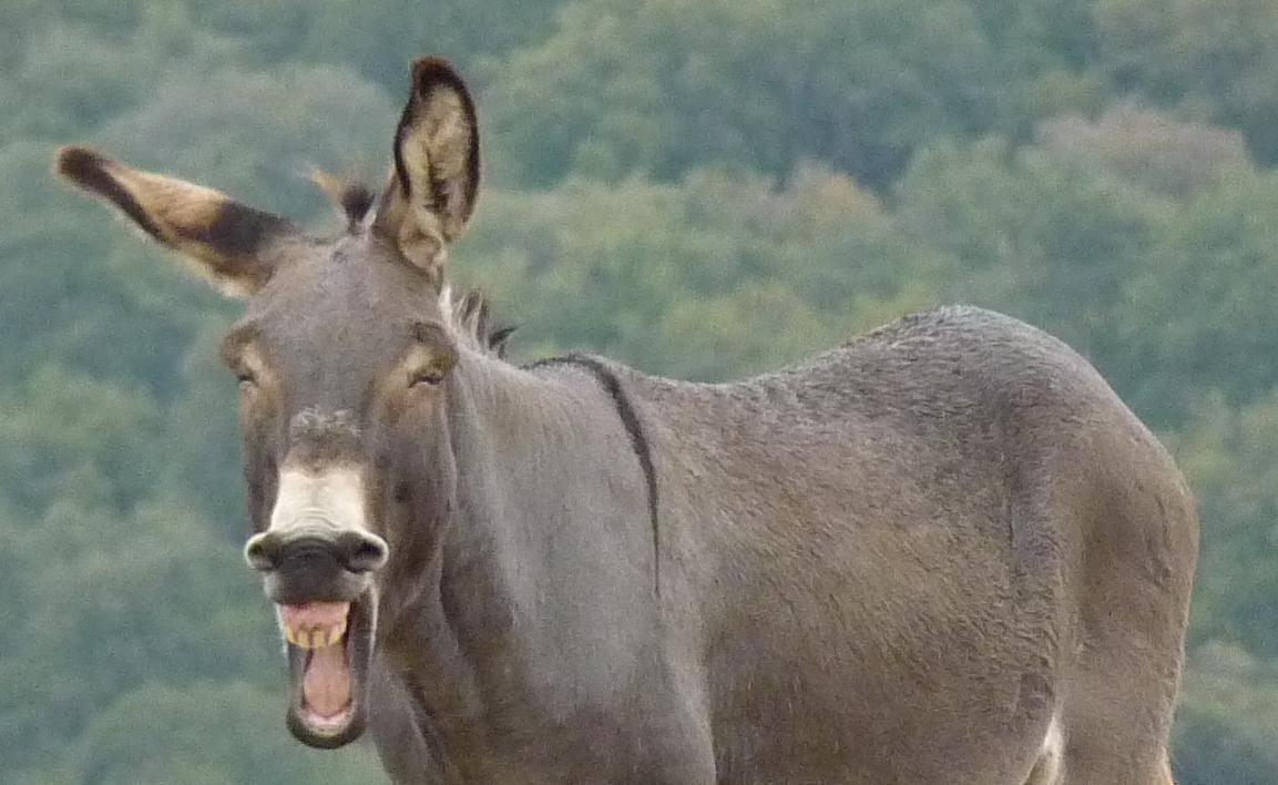 """Taringa! ¿Era un burro o no era un """"burro""""?"""