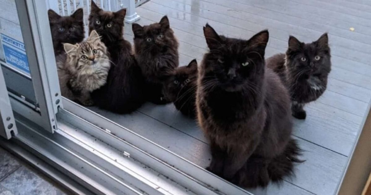5 35.jpg?resize=1200,630 - Stray Cat Brings Her Kittens To Meet The Lady Who Helped Her