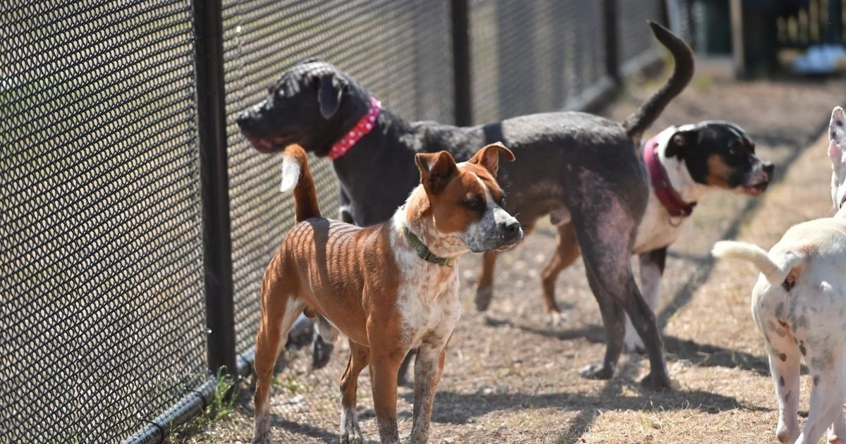 6 9.jpg?resize=1200,630 - Pet Shops In San Antonio Texas Will Only Sell Rescue Animals From 2021
