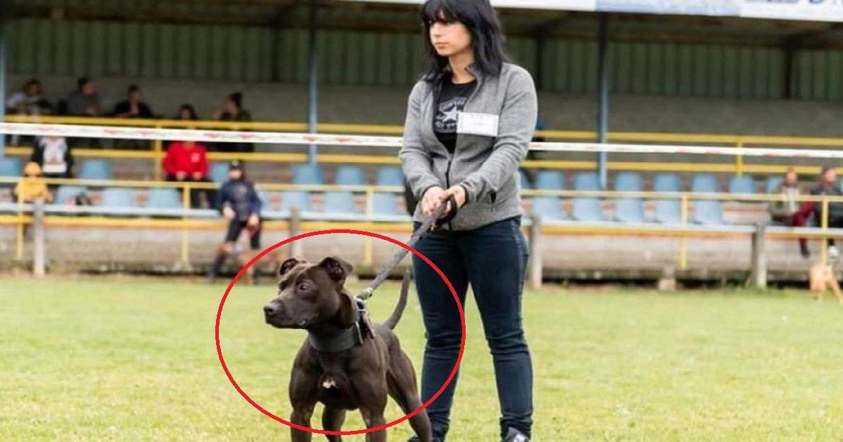 """6 curtis.jpg?resize=1200,630 - Curtis: que dit la loi sur la possession de chiens classés """"dangereux"""" ?"""