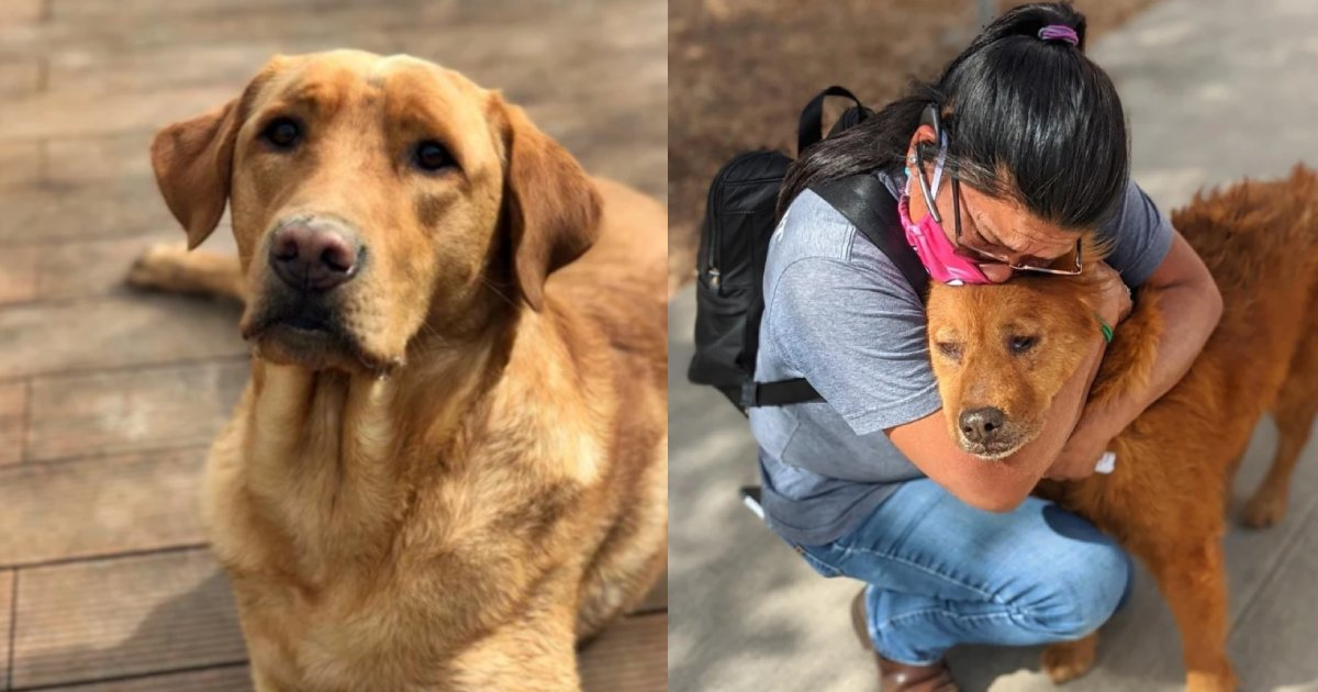 7 dog.png?resize=412,232 - 7年間別れ離れだった愛犬を見つけた飼い主… 再会できた理由があまりにも劇的で話題に!