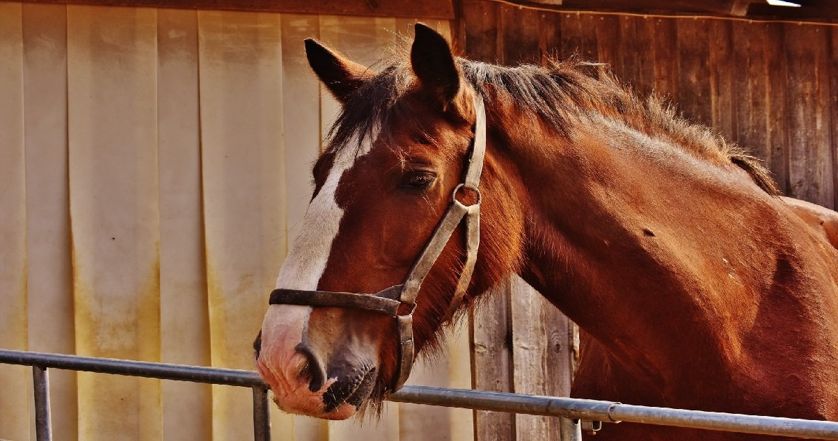 8 cheval.jpg?resize=412,232 - Un cavalier a été condamné pour avoir poussé son cheval jusqu'à la mort