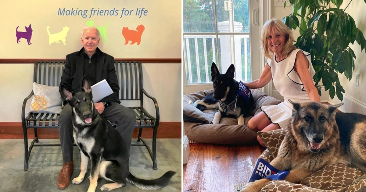 adfasdf.jpg?resize=412,232 - Joe Biden To Bring Back The Pets To White House After 4 Years