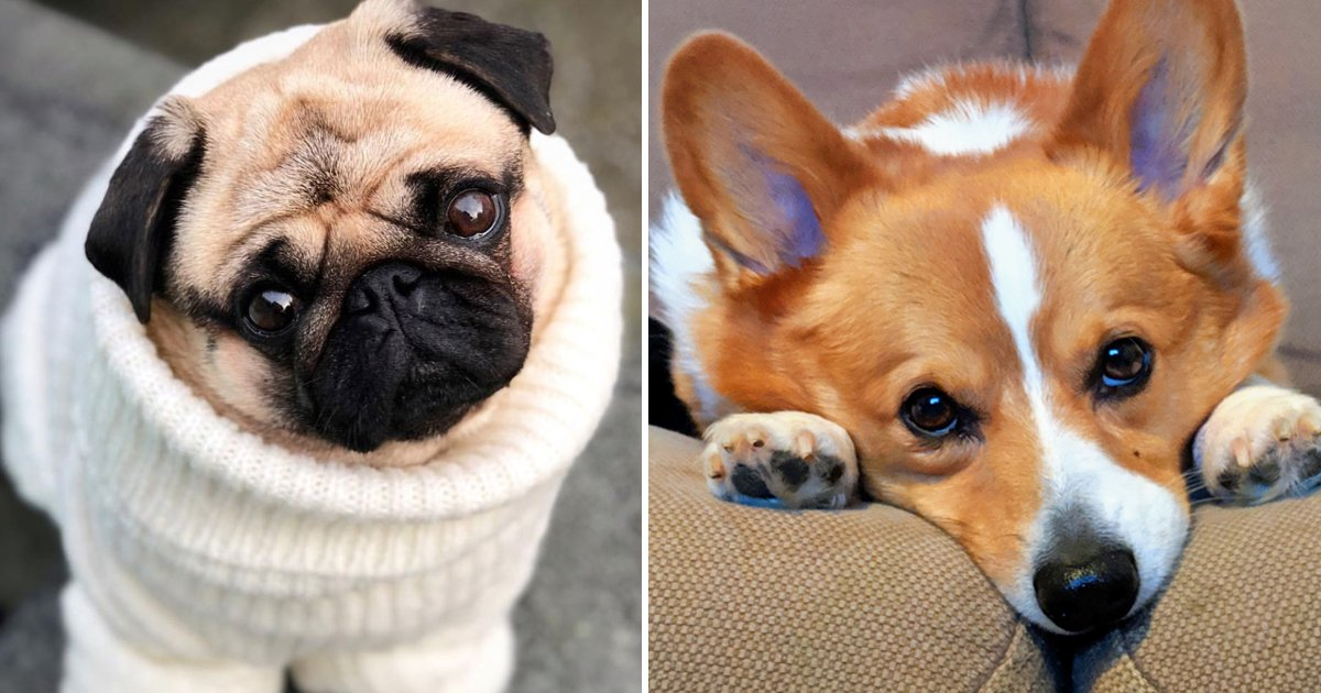 adfasf.jpg?resize=1200,630 - Best Dog Breeds Revealed: Find Out Where Your Pup Stands
