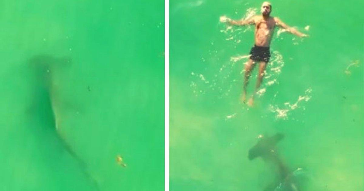 articulosportadas 1 35.png?resize=412,232 - Tiburón Martillo De Casi 3 Metros Rodea A Un Sujeto Que Nadaba En Una Playa