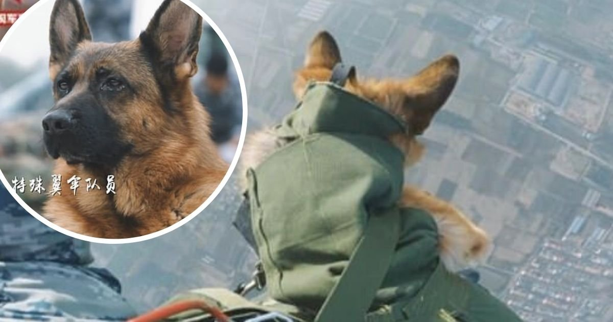 doggy.jpg?resize=1200,630 - Dog Paratrooper: German Shepherd Takes Part In Tandem Skydive With Handler As Part Of His Training