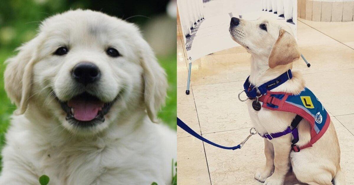 ec9588eb82b4eab2ac.jpg?resize=412,232 - 뽀시래기 강아지들이 시각장애인 안내견이 되기 위해 거쳐야 하는 5단계 훈련 과정