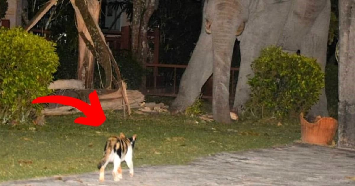 elephant6.jpg?resize=412,232 - Pet Cat Chases Away An Elephant That Wandered Into Its Garden Searching For Food