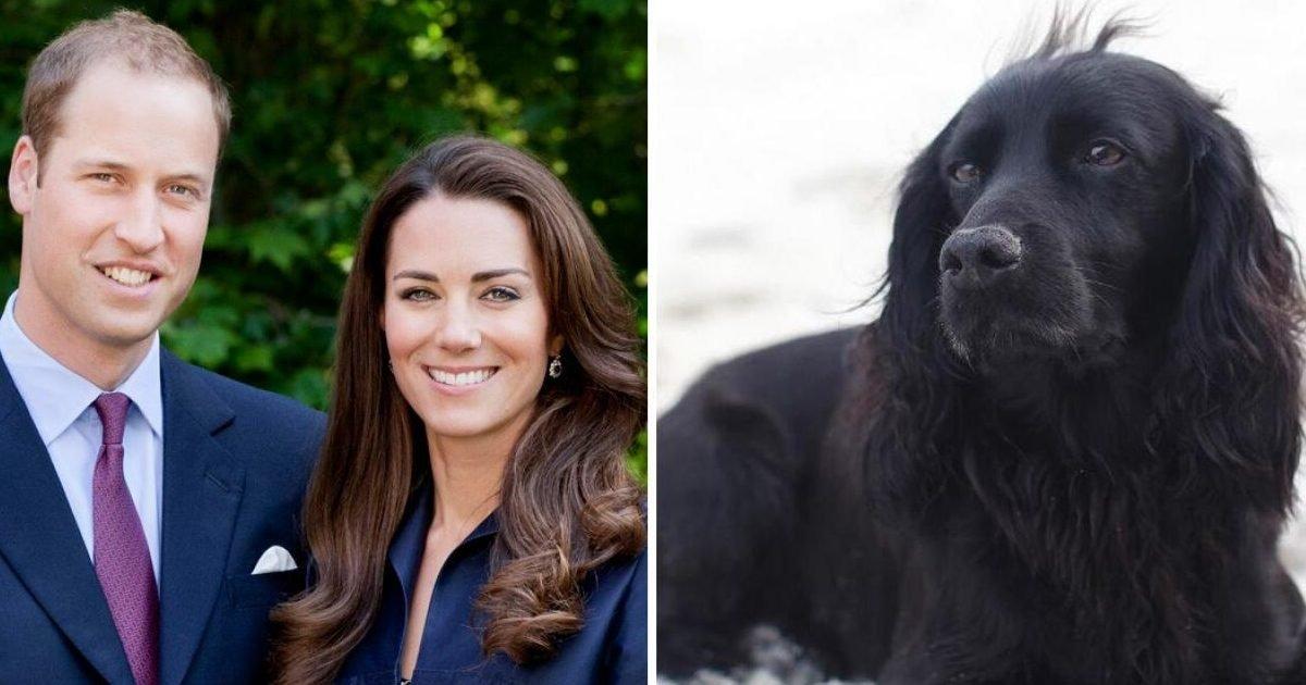 getty instagram william kate lupo 1120 v2 e1606182819647.jpg?resize=412,232 - Le prince William et Kate Middleton annoncent la mort de leur chien Lupo