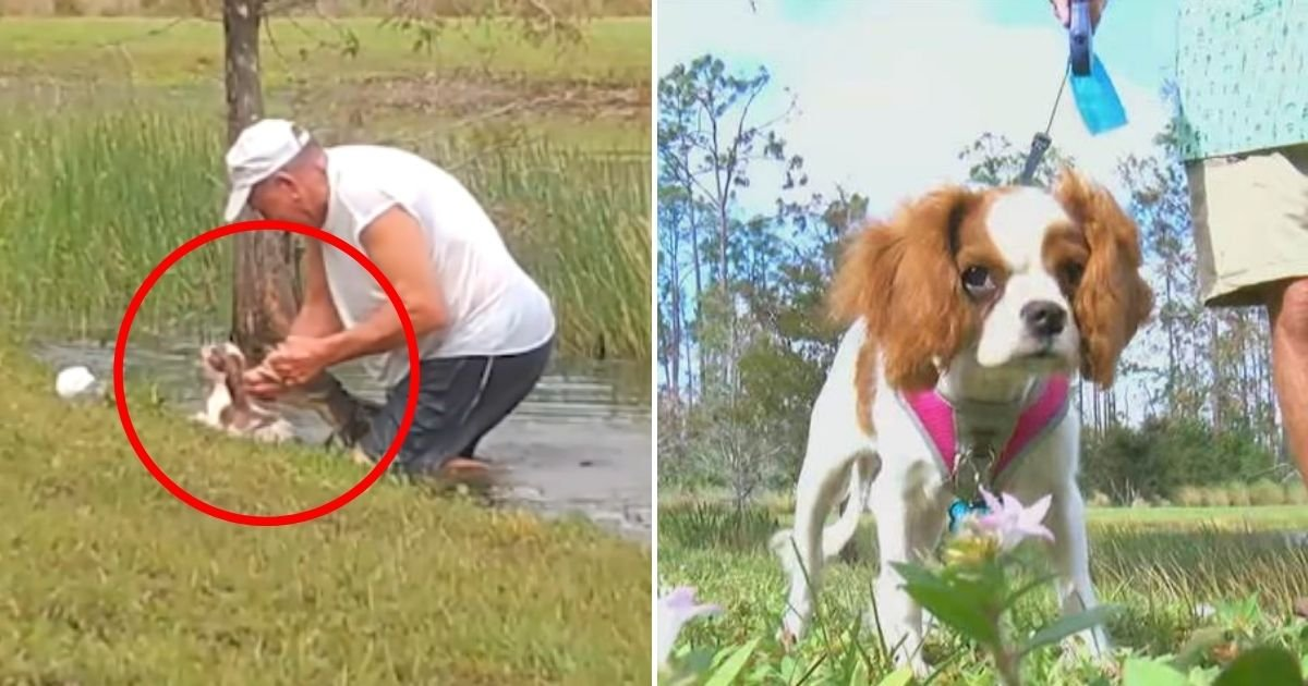 gunner5.jpg?resize=412,232 - 74-Year-Old Man Speaks Out After Saving A Puppy From An Alligator In Florida