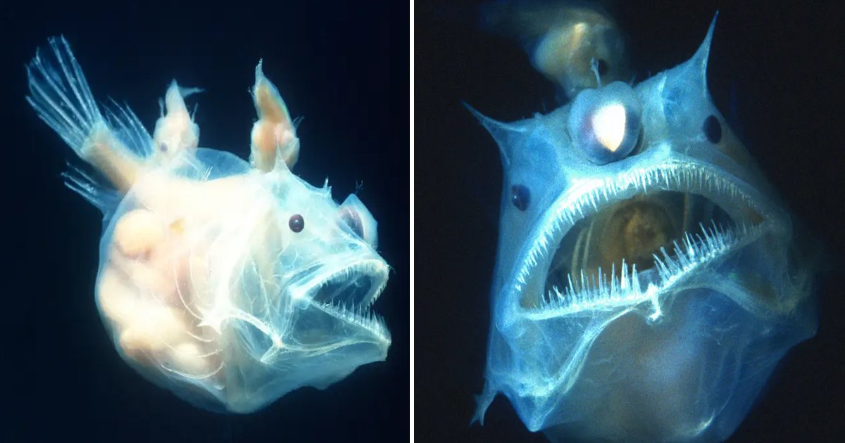 hahahaa.jpg?resize=412,232 - Say Hello To The Most Bizarre Yet Intriguing Deepest Ocean Fish Species