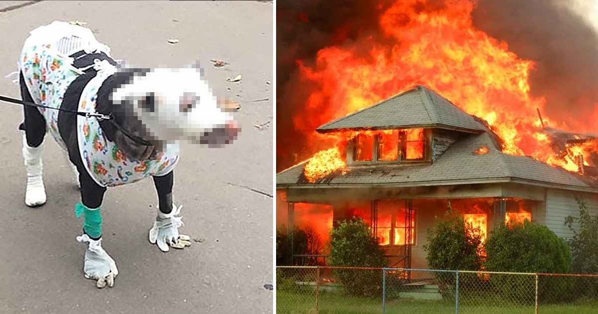 hahahaawer.jpg?resize=1200,630 - Hero Dog Suffers Terrible Burns As She Rescued Four Patients From A Hospice Fire
