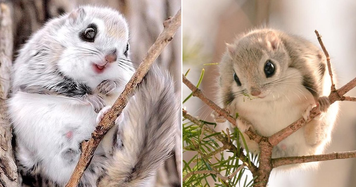 hhadg.jpg?resize=1200,630 - These Adorably Native Japanese Squirrels Are Bringing Pokémon Vibes To Life