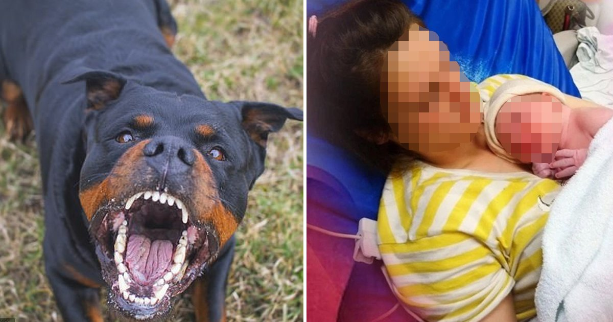 hsaf.jpg?resize=1200,630 - Chilling Scenes As Family Dog Attempts To Bury Newborn After Deadly Attack
