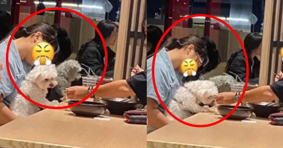 inudouhan.png?resize=412,232 - ペット同伴不可のレストランで堂々と犬を連れては備え付けのスプーンで食事させている客が大炎上!