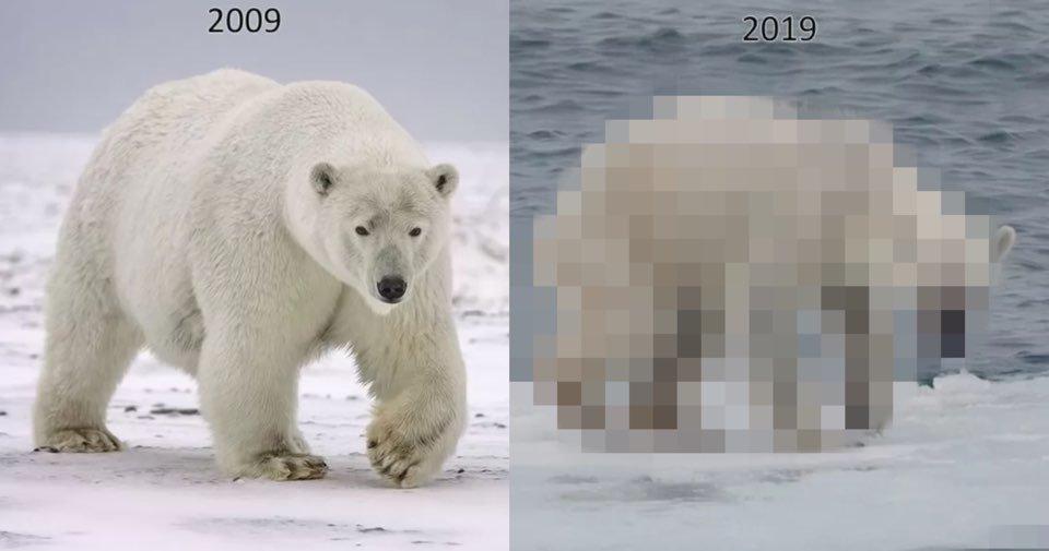 "kakaotalk image 2020 11 04 00 01 50.jpeg?resize=412,232 - ""북극곰의 상태가…"" 10년 동안 지구가 얼마나 많이 파괴됐는지 알 수 있는 사진"