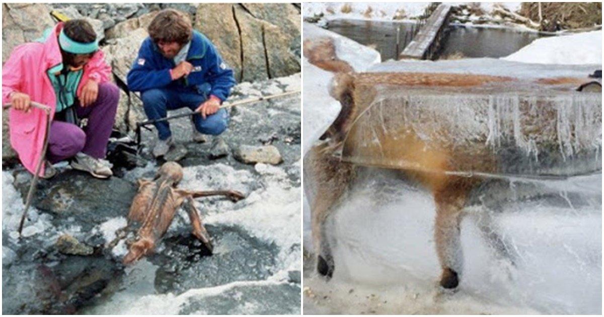 page 218.jpg?resize=1200,630 - 뭔가 신기하면서도 소름돋는 '기온 상승'으로 빙하가 녹으면서 발견되는 것들