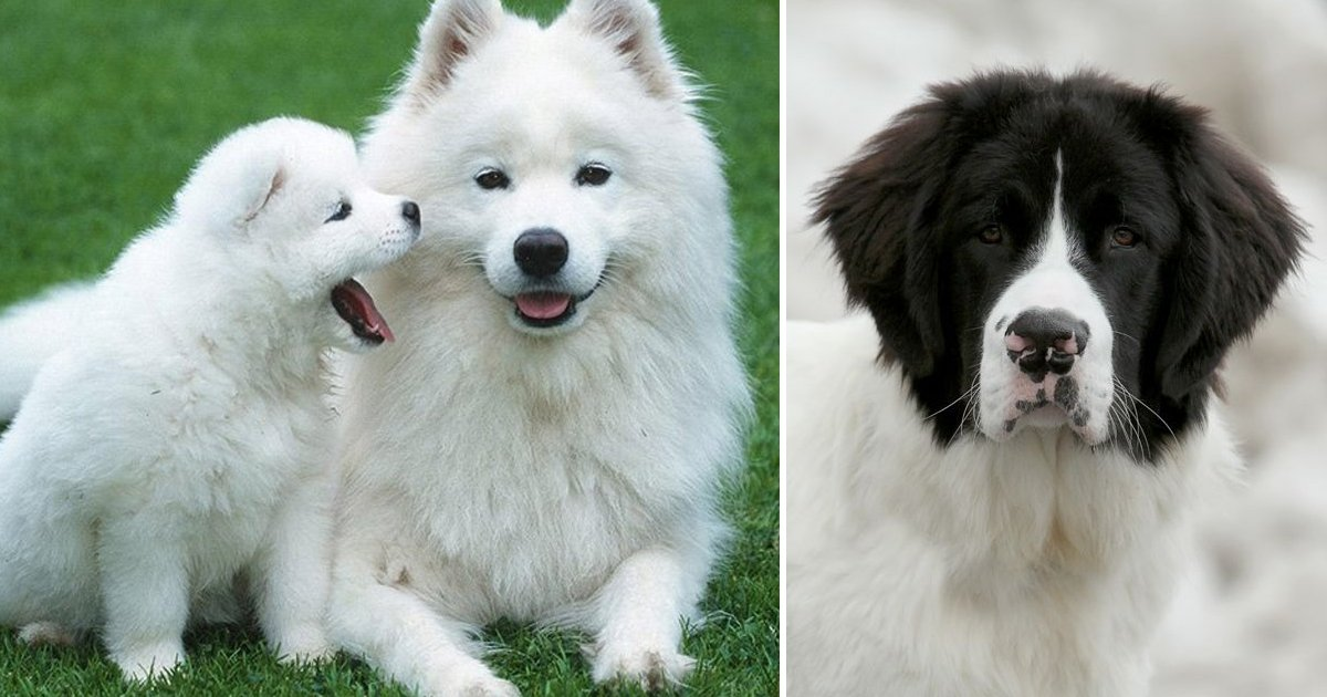 sdfsdfsdfg.jpg?resize=366,290 - 7 Heartwarming Images Of Cute Big Dogs That Are Guaranteed To Make You Smile