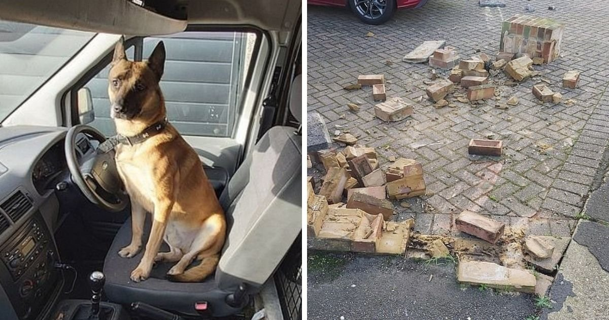 untitled design 1 23.jpg?resize=1200,630 - Hit-And-Run Driver Abandons Dog After Crashing Into A Wall
