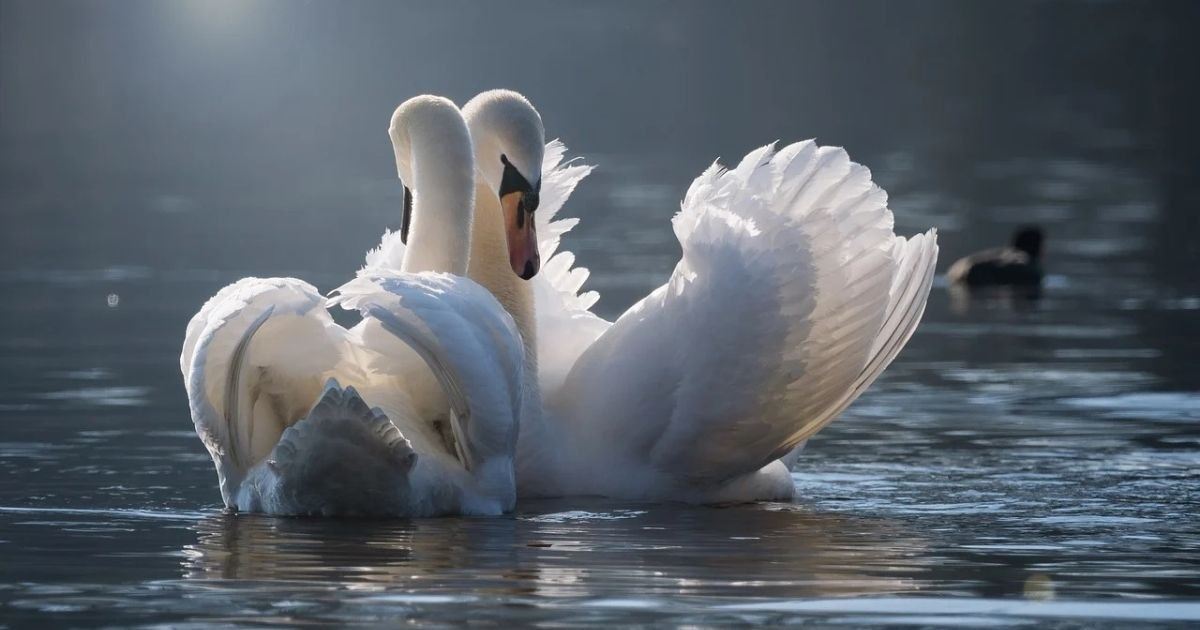 untitled design 4 7.jpg?resize=1200,630 - Heartbroken Swan Finds Love After Mourning Her Dead Mate For Years
