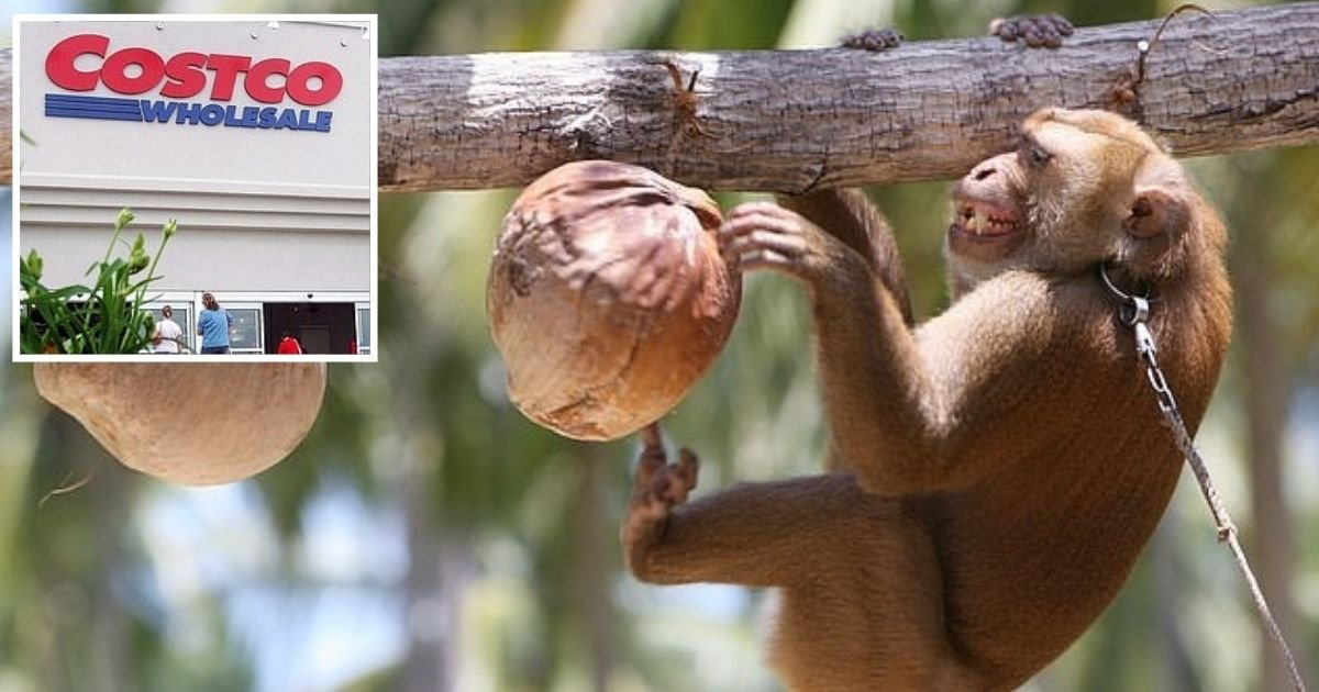 untitled design 4.jpg?resize=1200,630 - Costco Ditches Popular Coconut Milk Over The Product's Alleged Ties To Forced Monkey Labor
