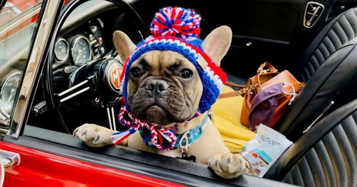 untitled design 5 4.jpg?resize=1200,630 - French Bulldog Makes History As He Becomes A Mayor